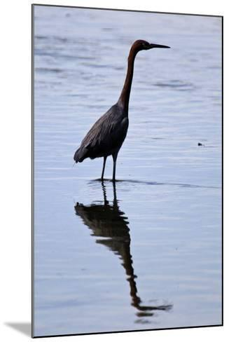Bird 4-Lee Peterson-Mounted Photographic Print