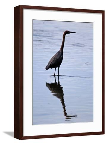 Bird 4-Lee Peterson-Framed Art Print