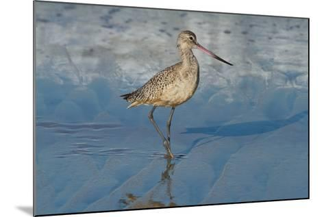 Shore Bird 1-Lee Peterson-Mounted Photographic Print