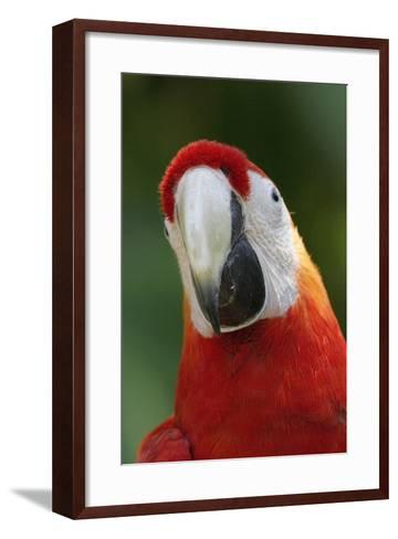 Scarlet Feather-Susann Parker-Framed Art Print