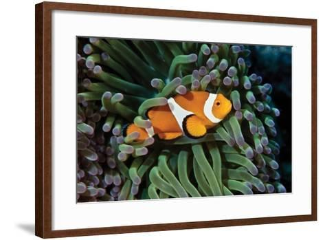 Fish 3-Lee Peterson-Framed Art Print