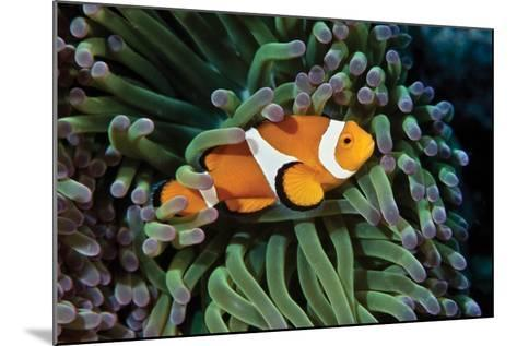 Fish 3-Lee Peterson-Mounted Photographic Print