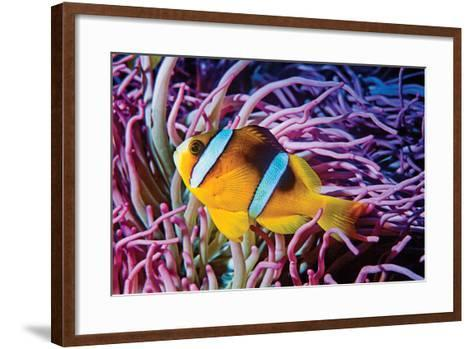 Fish 2-Lee Peterson-Framed Art Print