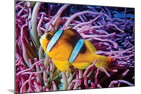 Fish 2-Lee Peterson-Mounted Photographic Print