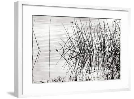 Reeds 2-Lee Peterson-Framed Art Print