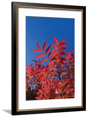 Fall Leaves 3-Lee Peterson-Framed Art Print