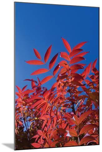 Fall Leaves 3-Lee Peterson-Mounted Photographic Print