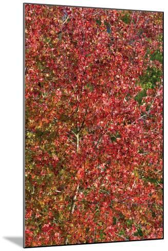Fall Leaves 2-Lee Peterson-Mounted Photographic Print