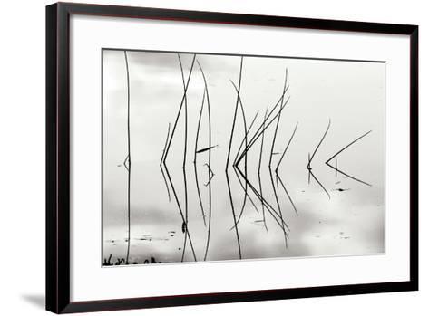 Reeds 1-Lee Peterson-Framed Art Print