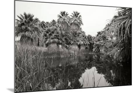 Ancient Palms I-Rita Crane-Mounted Photographic Print