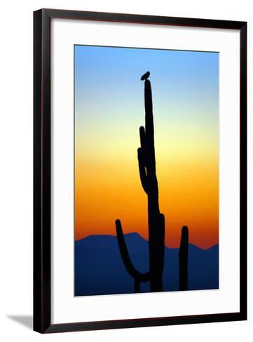 Owl at Sunset-Douglas Taylor-Framed Art Print