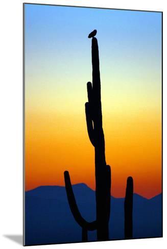Owl at Sunset-Douglas Taylor-Mounted Photographic Print