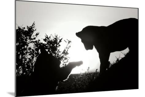 Lion Cub Morning BW-Susann Parker-Mounted Photographic Print