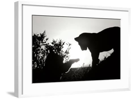 Lion Cub Morning BW-Susann Parker-Framed Art Print