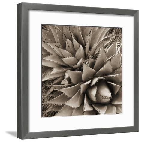 Desert Plants III-Bob Stefko-Framed Art Print