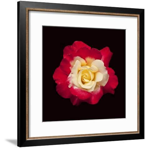 Red and White Rose-Lee Peterson-Framed Art Print