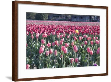 Yellow Among Pinks-Dana Styber-Framed Art Print