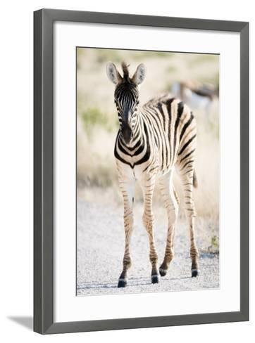 Zebra Colt II-Beth Wold-Framed Art Print
