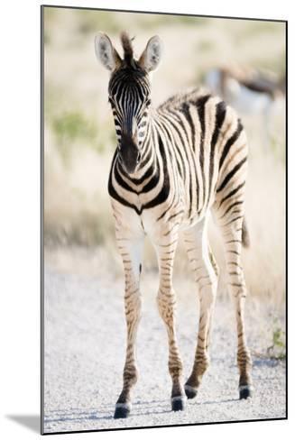 Zebra Colt II-Beth Wold-Mounted Photographic Print