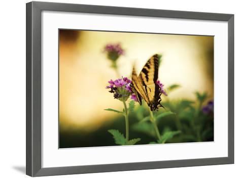 Garden Butterfly III-Philip Clayton-thompson-Framed Art Print