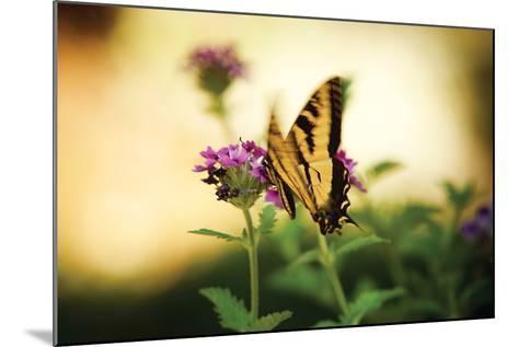 Garden Butterfly III-Philip Clayton-thompson-Mounted Photographic Print