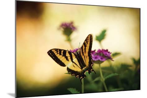 Garden Butterfly IV-Philip Clayton-thompson-Mounted Photographic Print
