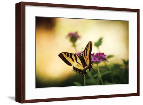 Garden Butterfly IV-Philip Clayton-thompson-Framed Art Print
