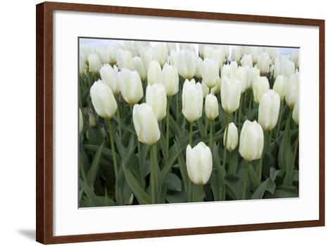 White Tulips I-Dana Styber-Framed Art Print