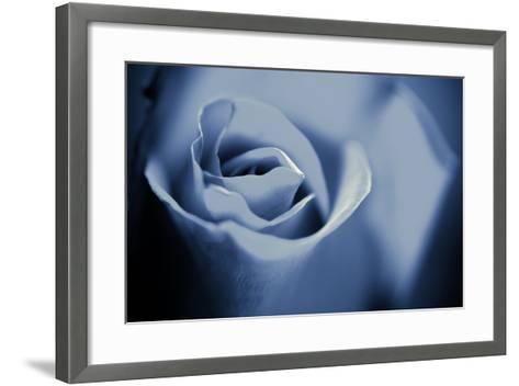 Blue Rose II-Beth Wold-Framed Art Print