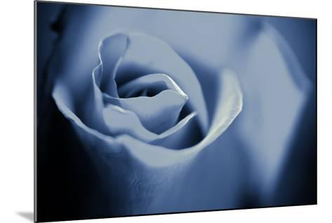 Blue Rose II-Beth Wold-Mounted Photographic Print