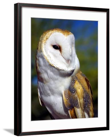 Barn Owl-Douglas Taylor-Framed Art Print