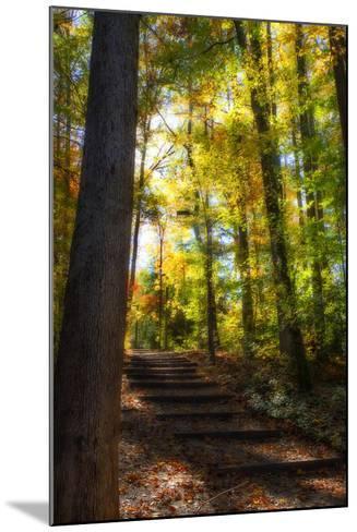 Autumn Light II-Alan Hausenflock-Mounted Photographic Print