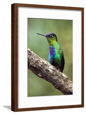 Hummingbird I-Larry Malvin-Framed Art Print