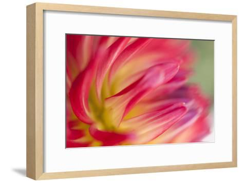 Dahlia Close-up I-Beth Wold-Framed Art Print