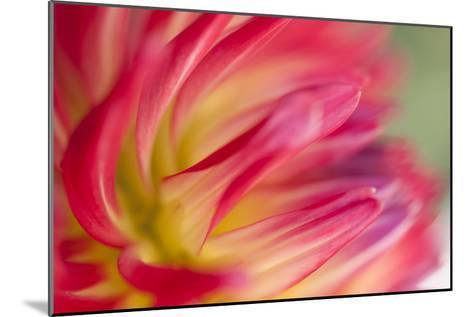 Dahlia Close-up I-Beth Wold-Mounted Photographic Print