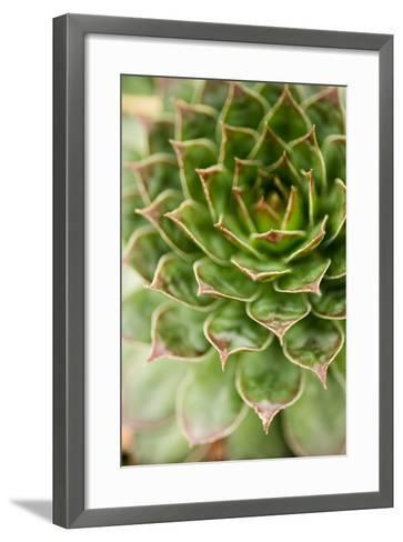 Sempervivum Succulent III-Erin Berzel-Framed Art Print