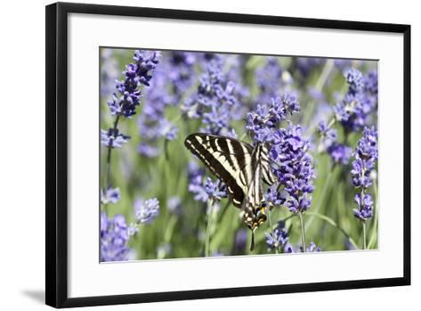 Lavender and Butterfly II-Dana Styber-Framed Art Print