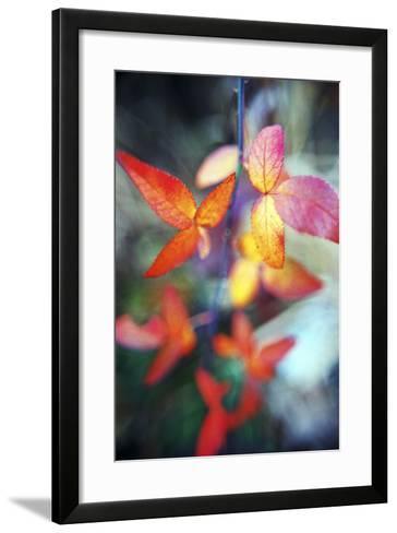 Fall Leaves II-Bob Stefko-Framed Art Print