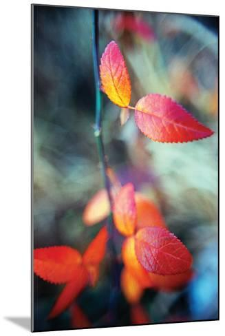Fall Leaves I-Bob Stefko-Mounted Photographic Print