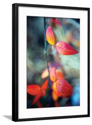 Fall Leaves I-Bob Stefko-Framed Art Print