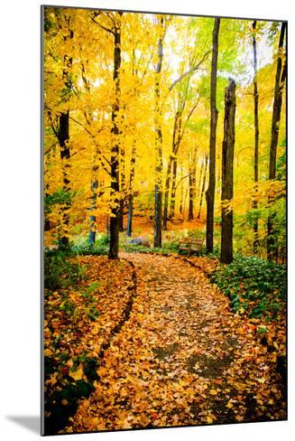 Autumn Pathway IV-Beth Wold-Mounted Photographic Print