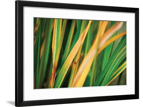 Grass in Fall II-Bob Stefko-Framed Art Print