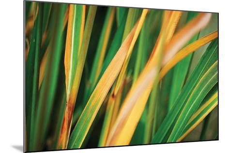 Grass in Fall II-Bob Stefko-Mounted Photographic Print