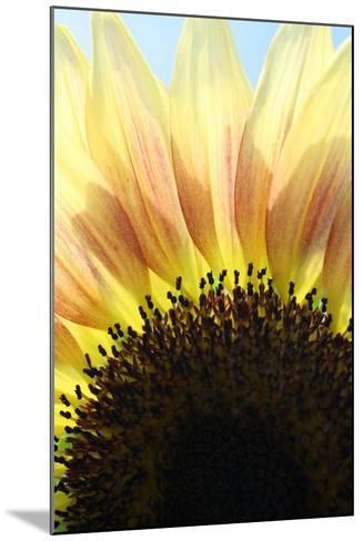 Sunflower V-Tammy Putman-Mounted Photographic Print