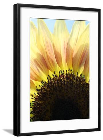 Sunflower V-Tammy Putman-Framed Art Print