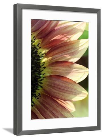 Sunflower IV-Tammy Putman-Framed Art Print