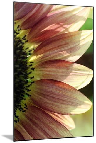 Sunflower IV-Tammy Putman-Mounted Photographic Print