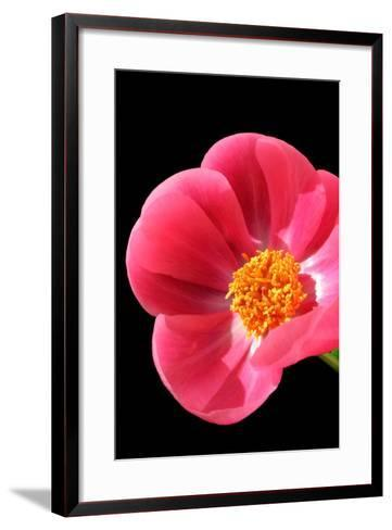 Pink Peony I-Tammy Putman-Framed Art Print