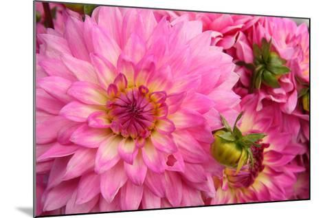 Spring Garden II-Maureen Love-Mounted Photographic Print
