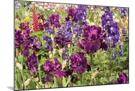 Purple Garden II-Maureen Love-Mounted Photographic Print